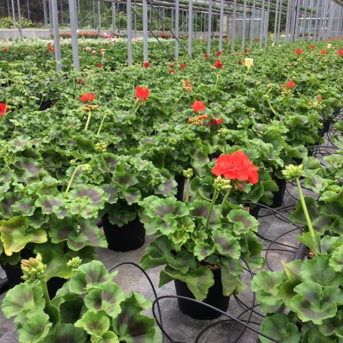 piante nella serra