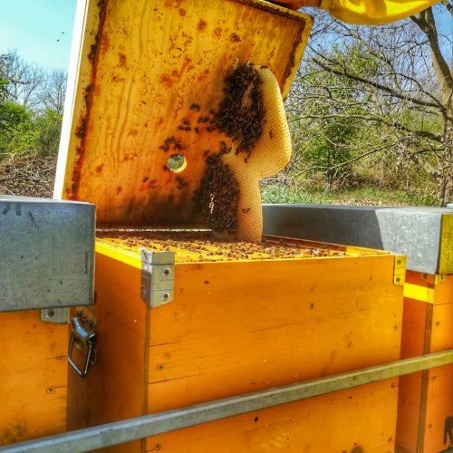 apicoltura Roncolino api